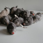 Fur Mouse Cat Toy