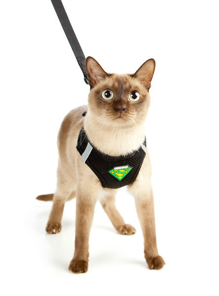 Most Comfortable Small Dog Harness