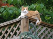 Gardening for you and your cats