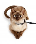 Cat Collar & Leash TSA Fast Pass