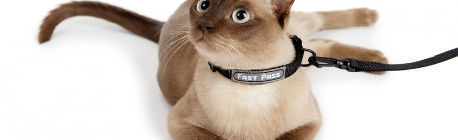 Collar & leash for cat