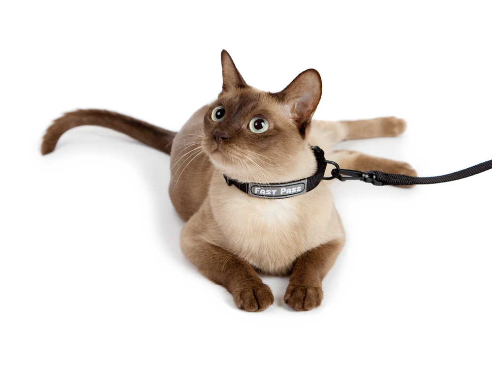 Dog Harness For A Cat