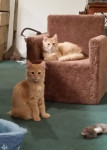 Kittens love to play – Meet Tucker and Pete
