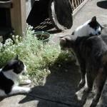 Kats'n Us Cats