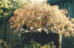 Cat stories, cat blog