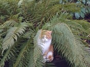 Buddy in a fern